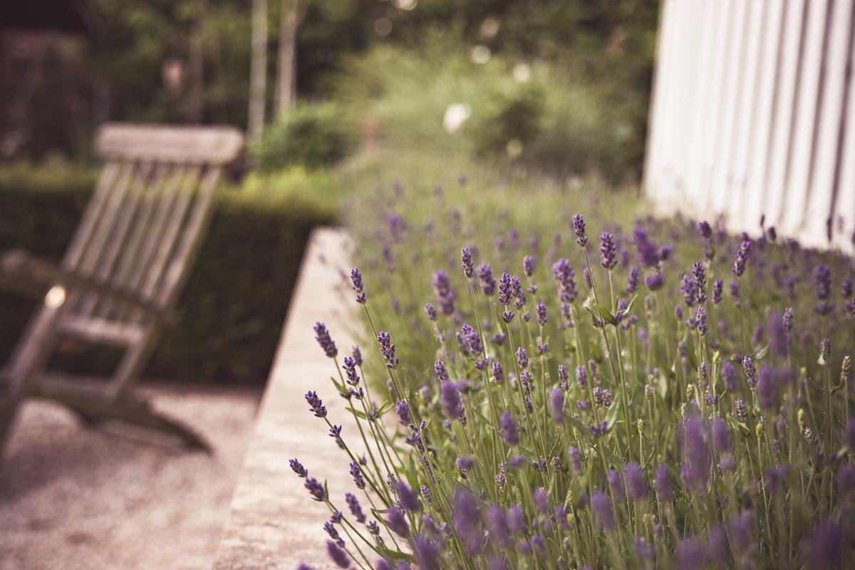 Blume_Bild_5