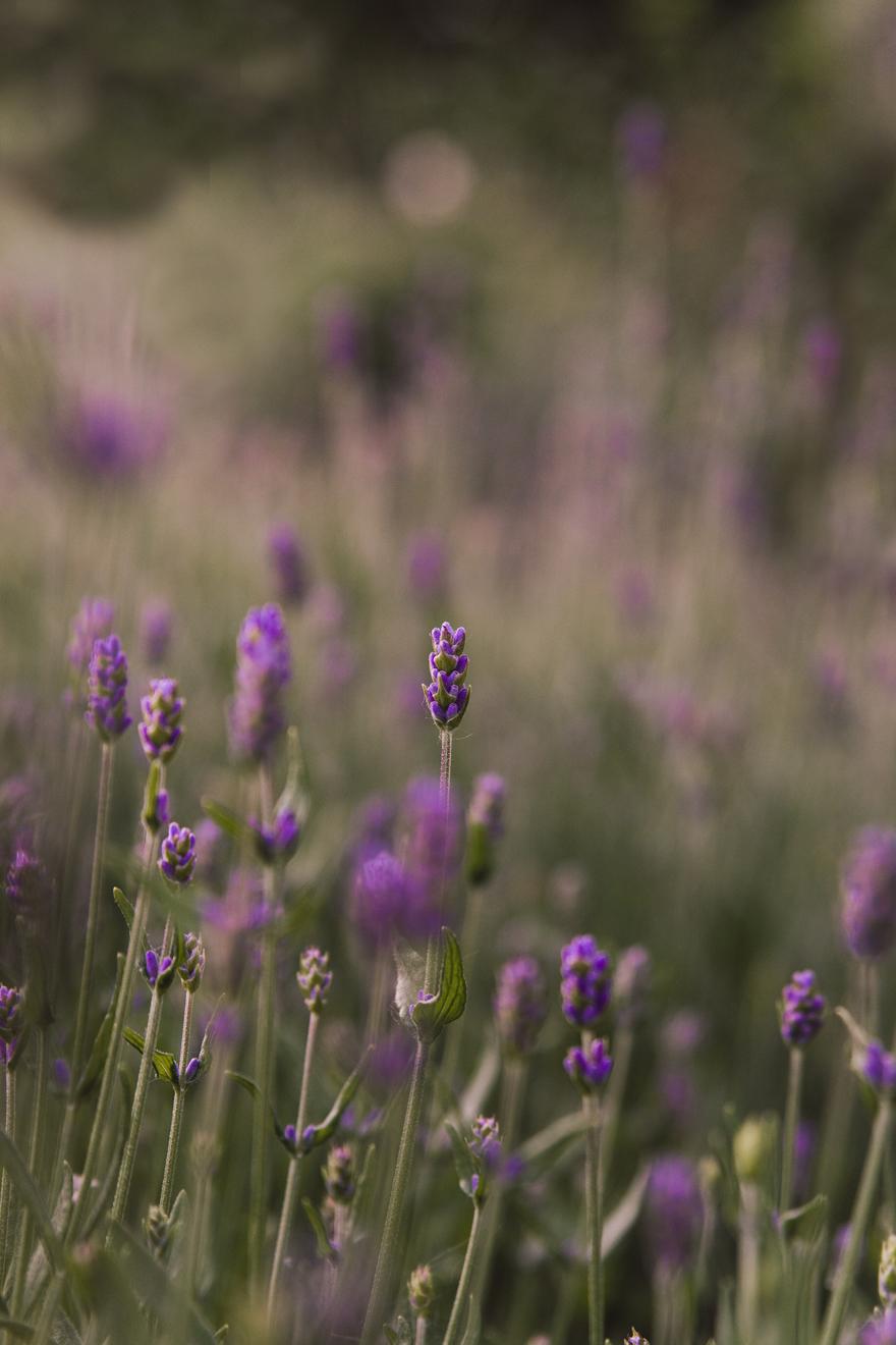 Blume_Bild_9